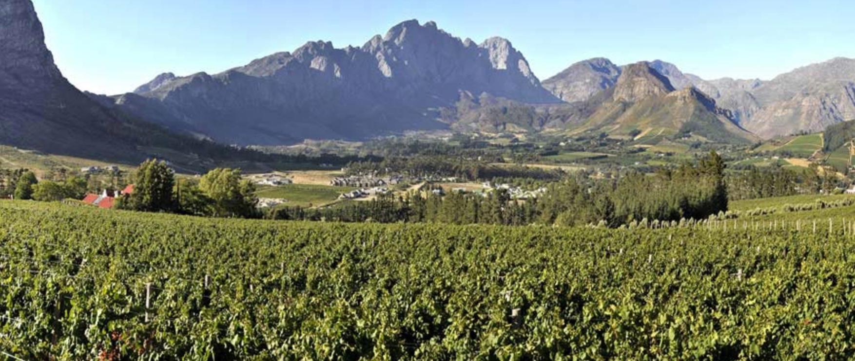 Cape Chamonix besøger Vinkunsten – Vinsmagning fredag den 7. september kl 18-20